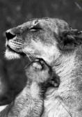 Amazing Animals (3)